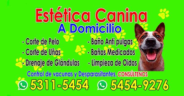 Estética Canina a domicilio en Guatemala