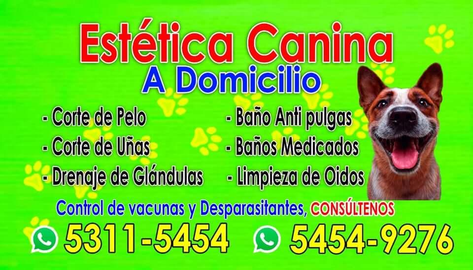 Grooming a domicilio en Guatemala