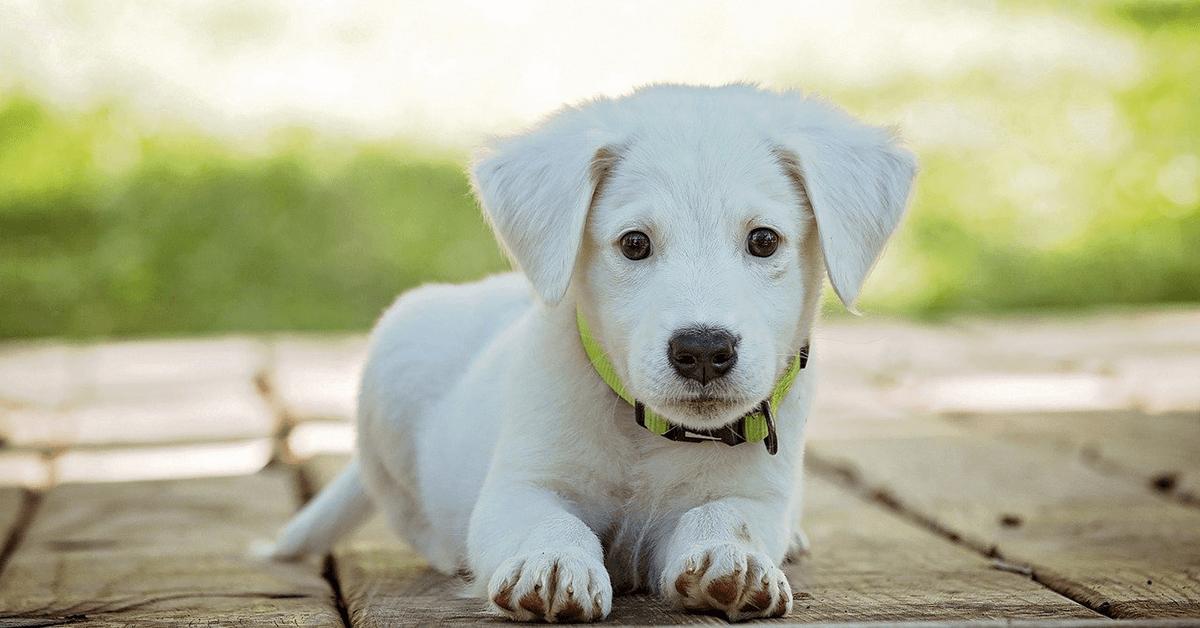 Los 10 Mejores Collares para Perros